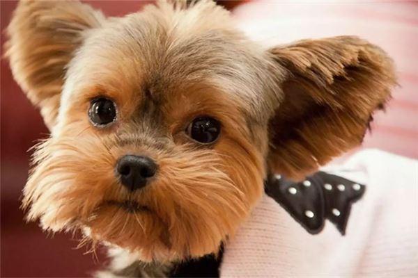 好听小狗的名字公的帅气的