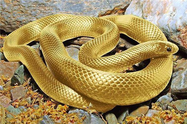 当然还有非常出名的《白蛇传》,蛇在不同剧中所代表的形象也是多面的.