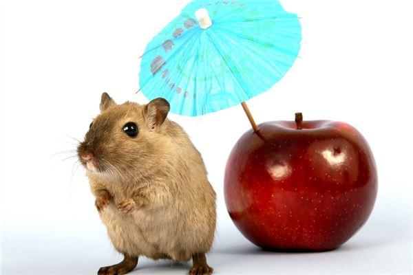 属鼠与什么属相相克