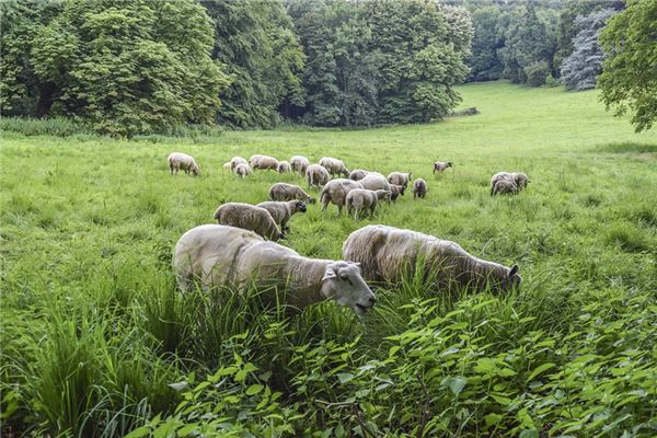 1979属羊运程每月