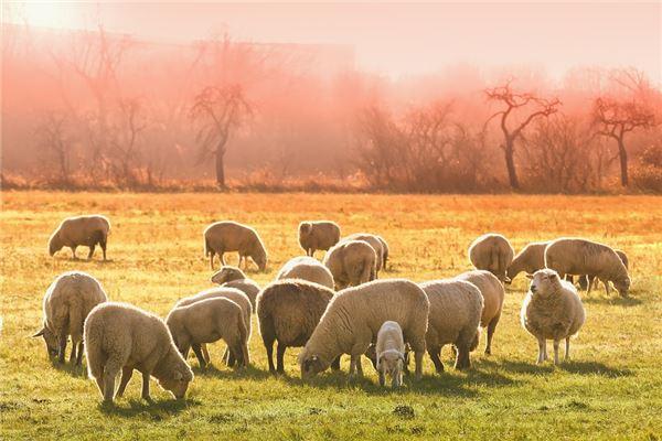 羊的六合生肖是什么