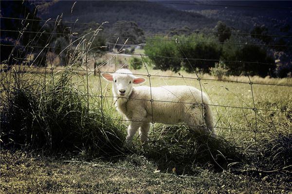 属羊跟什么属相犯冲