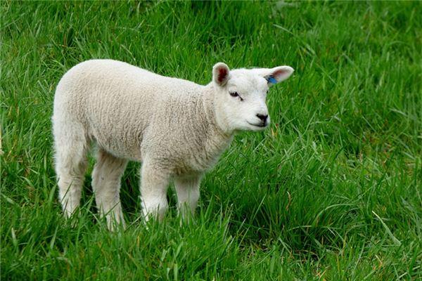 79年属羊运气如何