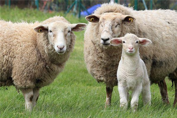 2003年属羊的2020年运气