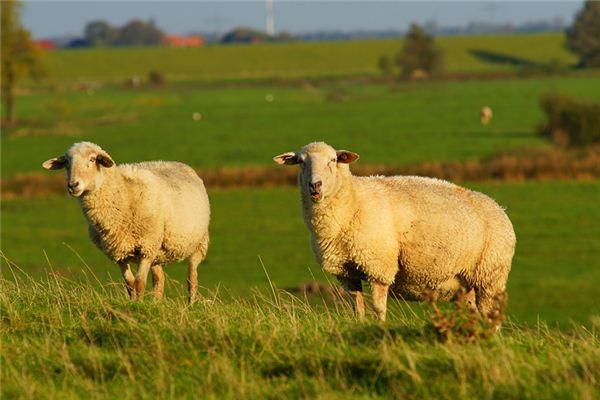 1967年属羊的是什么纳音五行