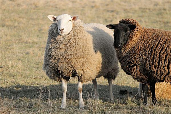 67年属羊人50岁后运气如何