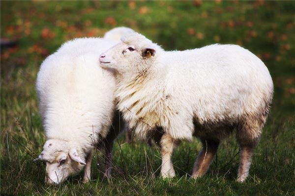 202几年是羊年