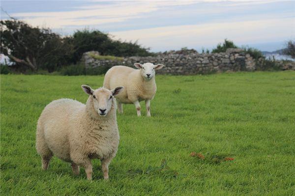 2003年属羊的是什么纳音五行