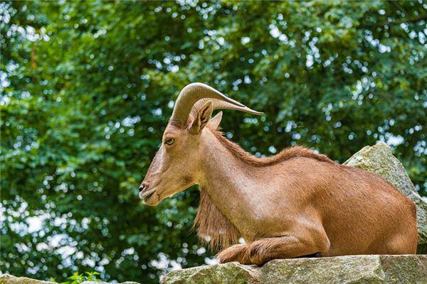 2015年属羊的是什么纳音五行
