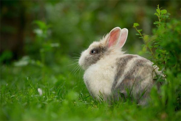 属兔人2020年犯太岁怎么避免