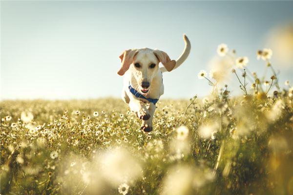 ♍♍属狗的人对朋友忠心