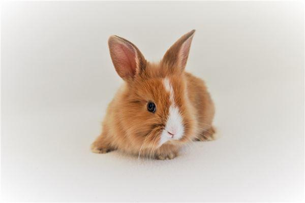 2023年是生肖兔的本命年。