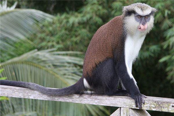 猴年犯太岁怎么办?