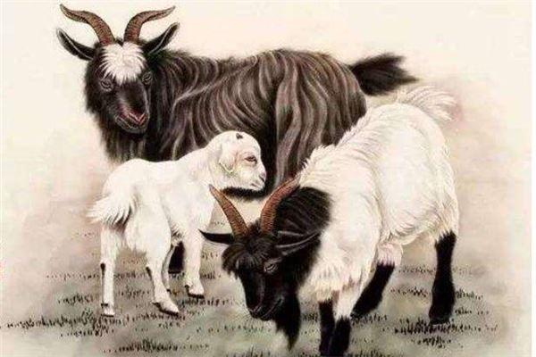 生肖羊女性的性格