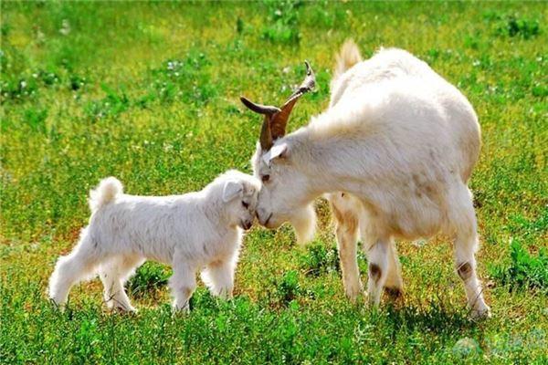 2019年羊宝宝在哪几个月出生的命运最好