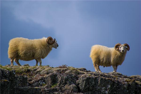十二生肖中,属羊的和什么属相最配排行榜揭秘