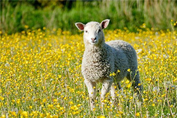 出生运势分析:羊年宝宝几时出生最好