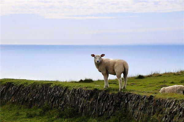 属羊的几月出生最好命